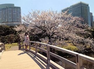 写真 2桜6a