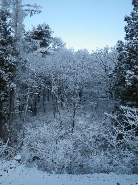 6日の雪3