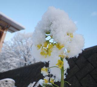 6日の雪8