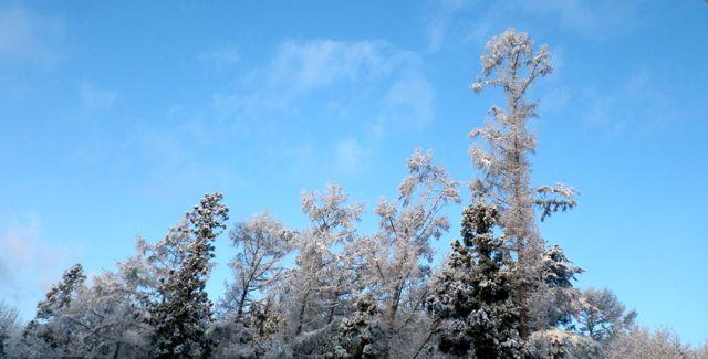 6日の雪5