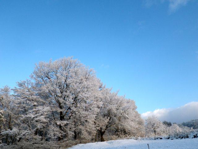 6日の雪7