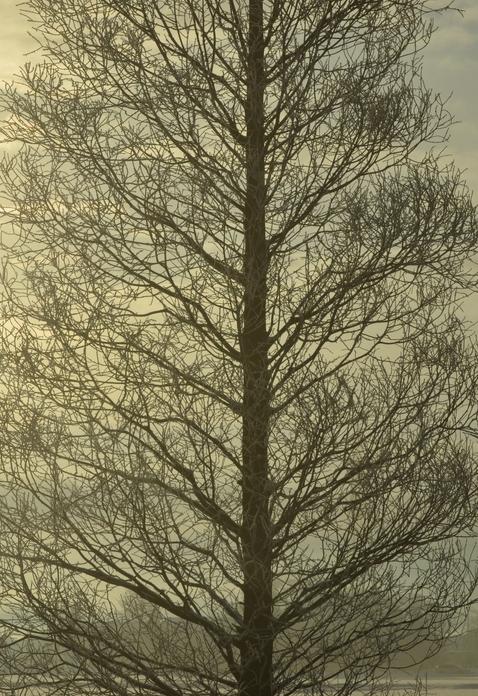 冬の朝陽-4
