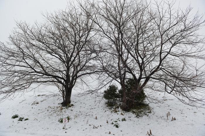 雪の中の木-1