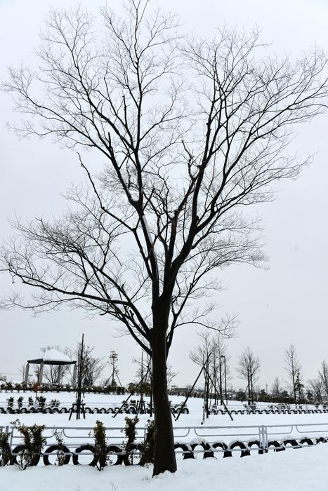 雪の中の木-2