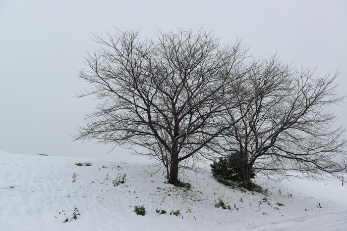 雪の中の木-3