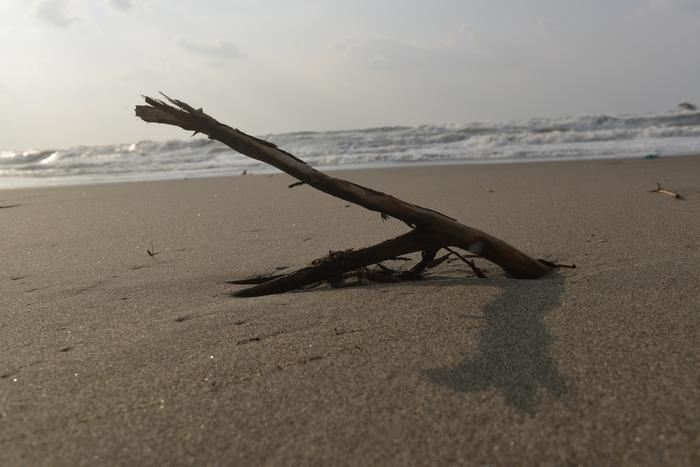 砂浜 流木-1