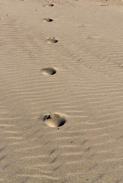 砂浜の砂-2