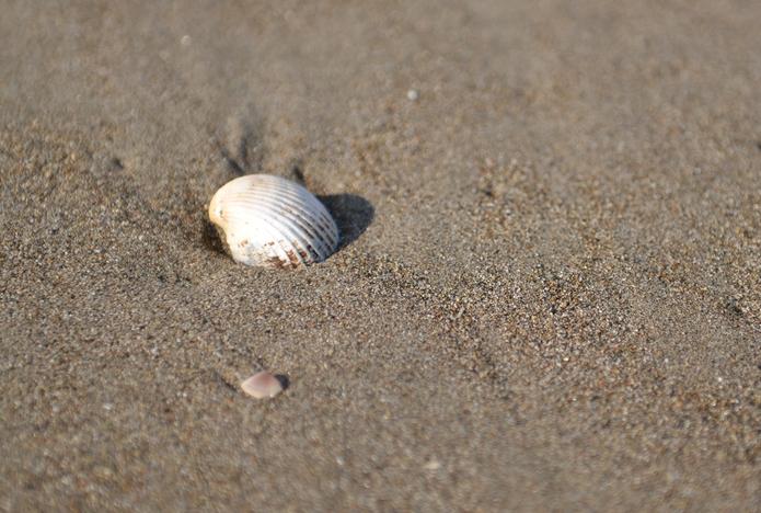 砂浜に流れ着いたもの-3