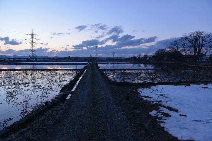 夕暮れ レンコン畑-2