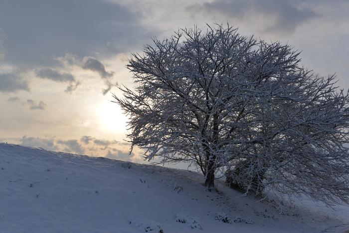 雪再び-1