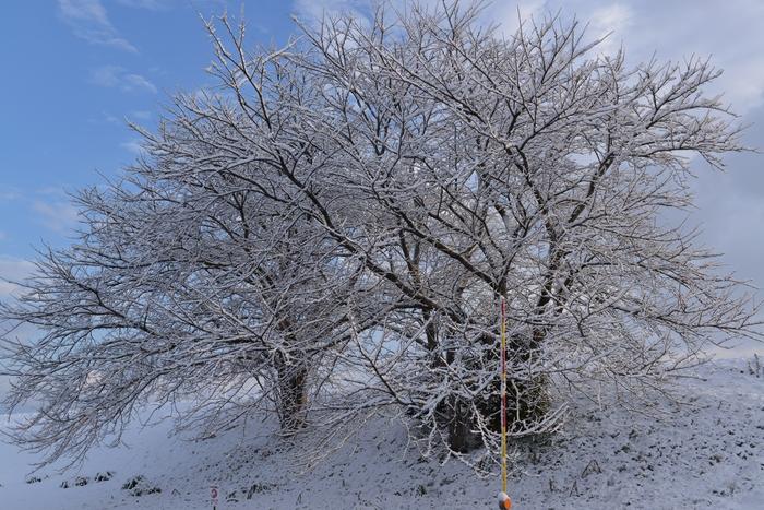 雪再び-2