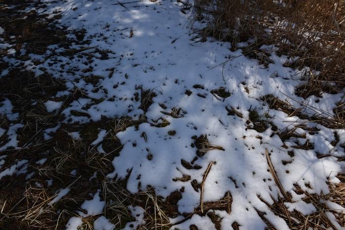 雪解け近し-2