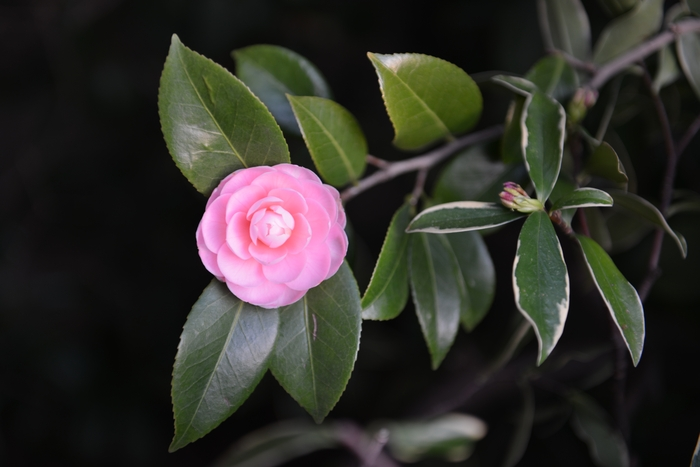 初めて咲く花-1