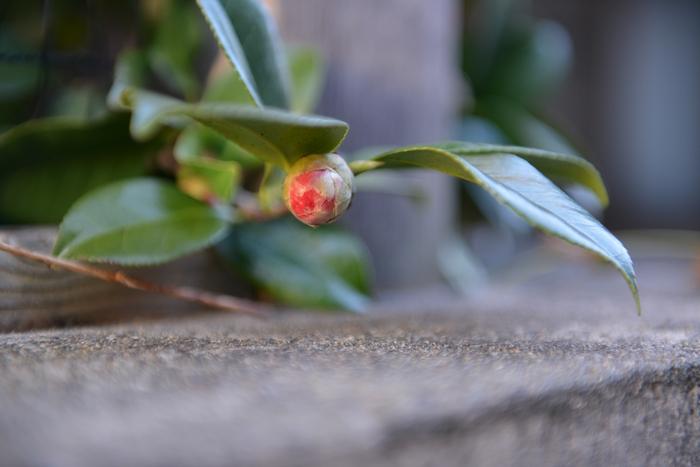 初めて咲く花-2