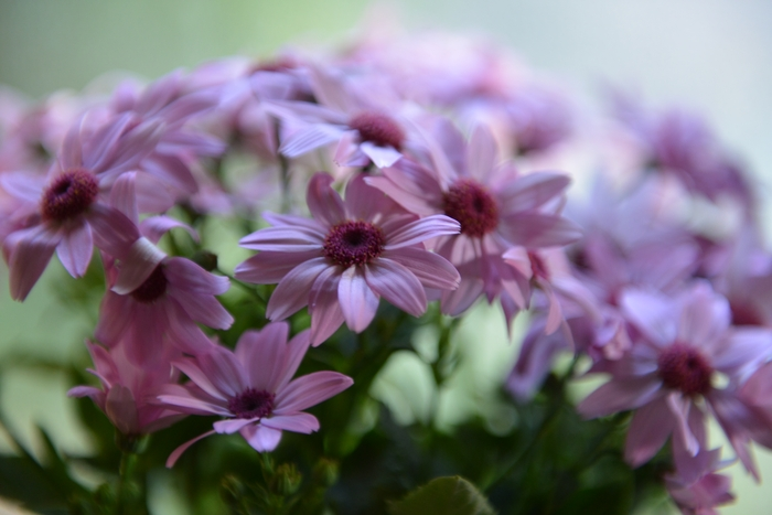 花瓶の花-1
