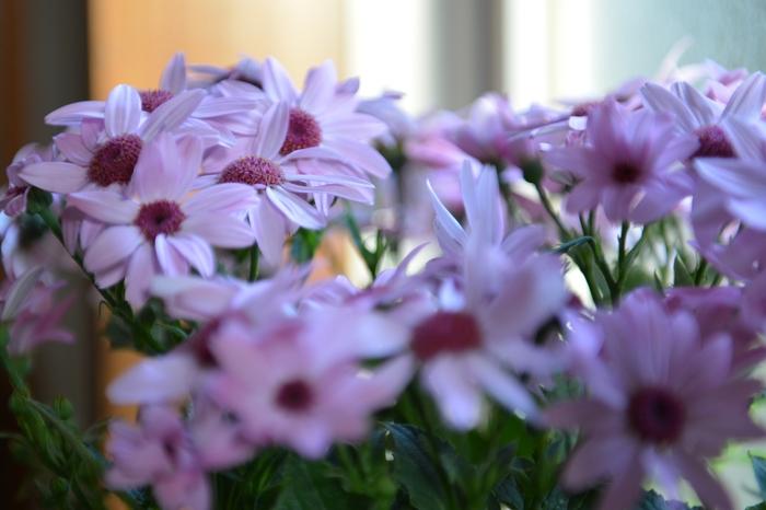 花瓶の花-2