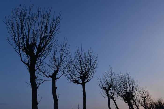 樹のシルエット-1