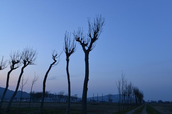樹のシルエット-2