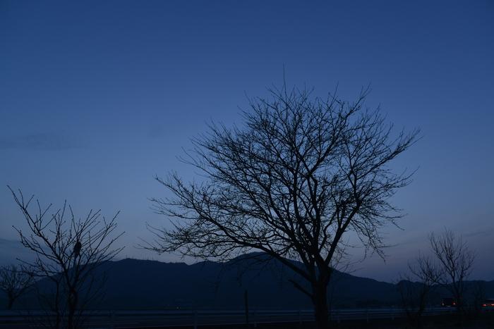 樹のシルエット-3