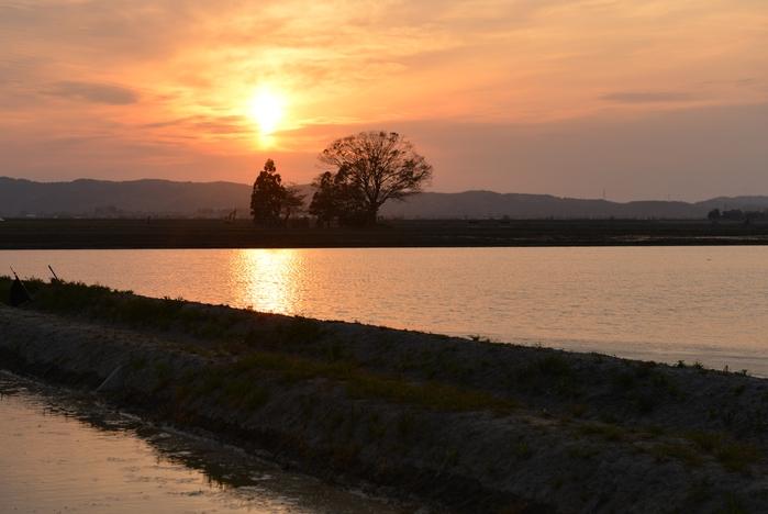 水田に沈む夕陽-2