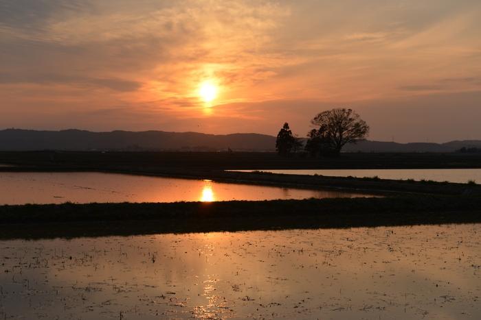 水田に沈む夕陽-1
