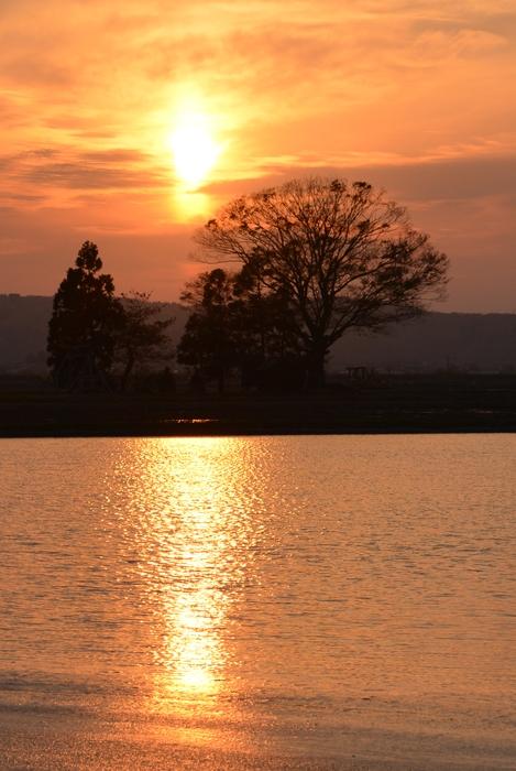 水田に沈む夕陽-3