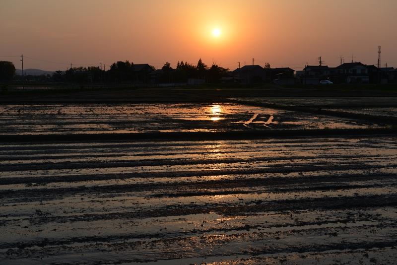 夕陽 田植え前-2