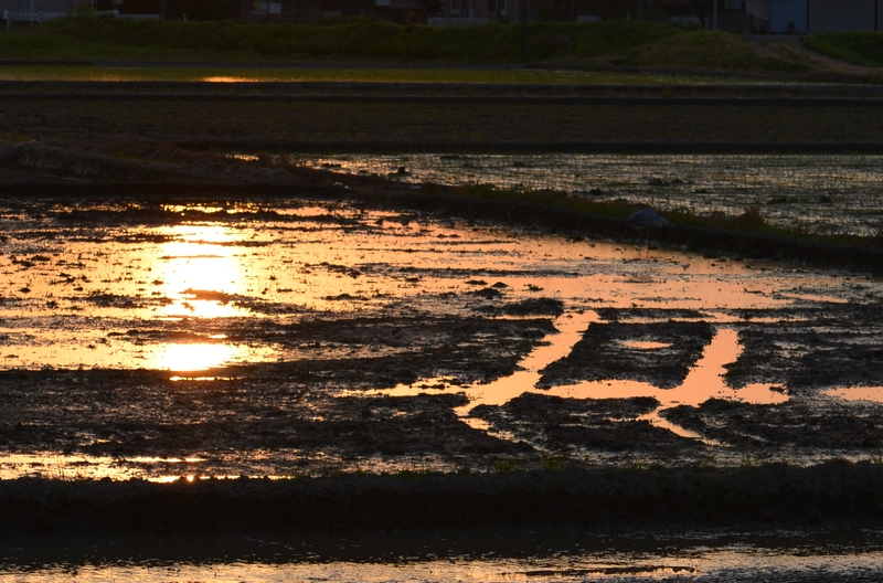 夕陽 田植え前-3
