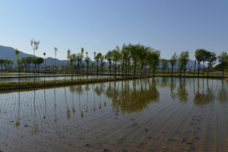 田植えの候-2