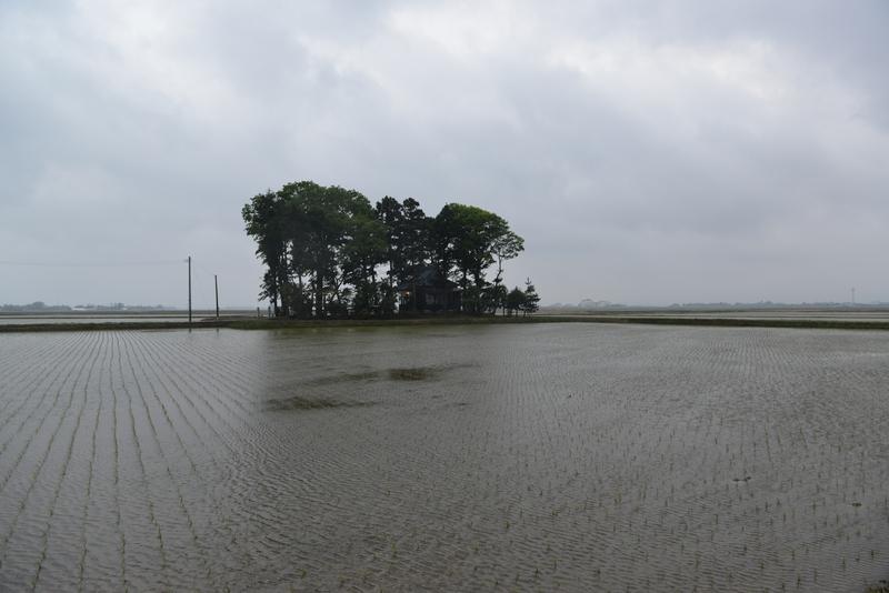 久々の雨-1