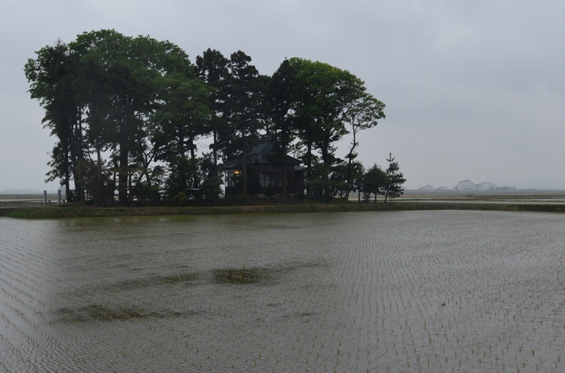 久々の雨-2