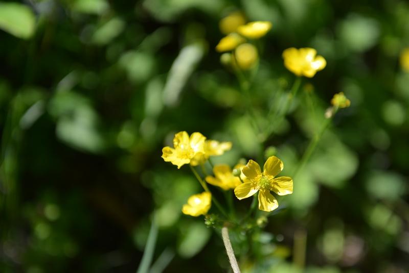 野に咲く花-3