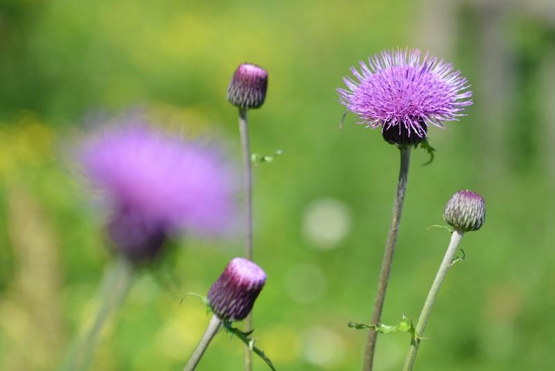 野に咲く花-1