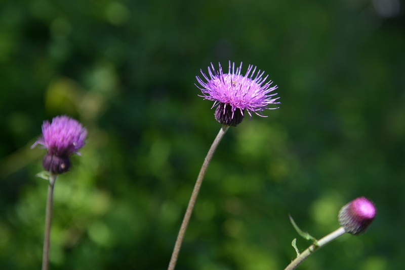 野に咲く花-2