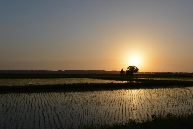 今日の夕陽-1