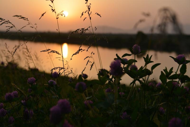 土手の夕陽-1