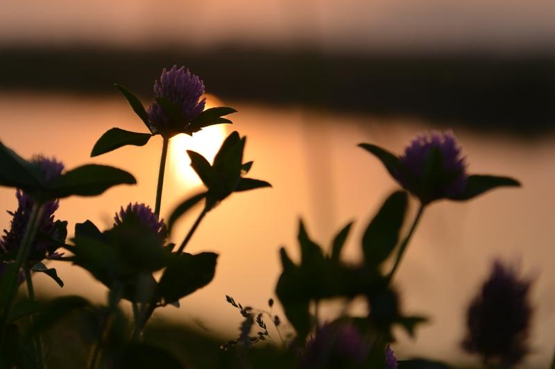 土手の夕陽-2