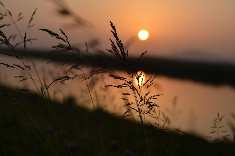 土手の夕陽-3