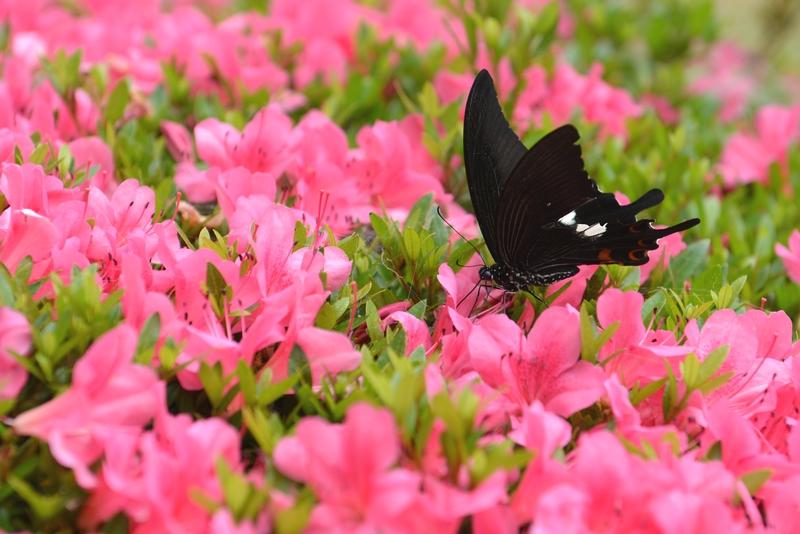 花と蝶-2