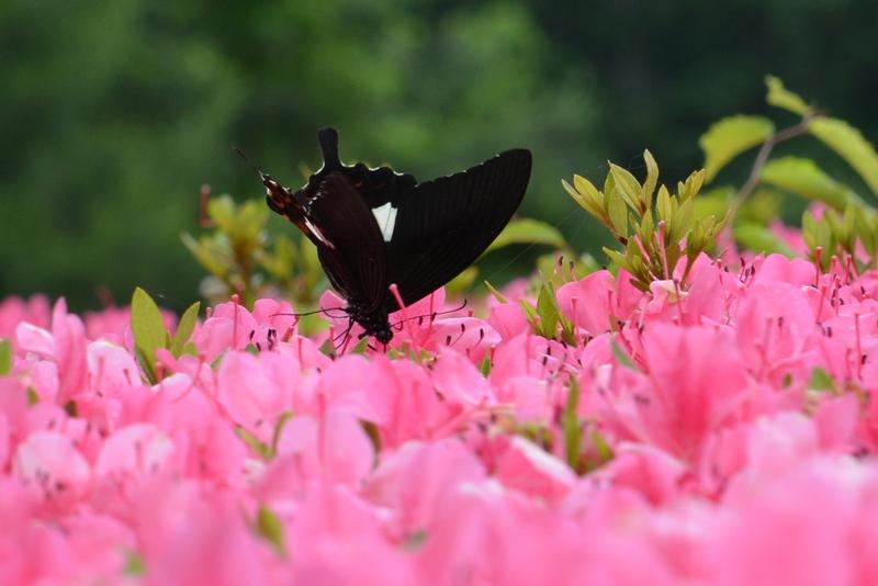 花と蝶-3