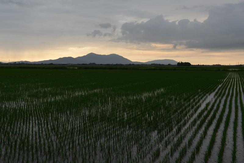 梅雨空 水田-2