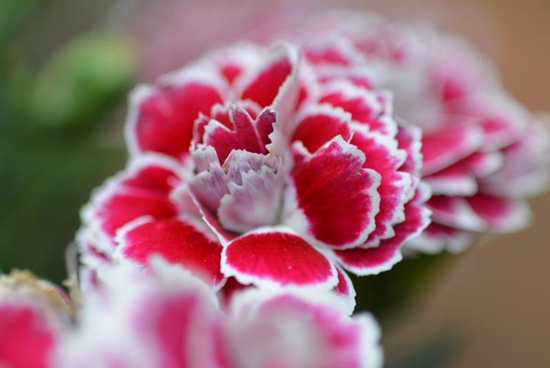 玄関先の花-1