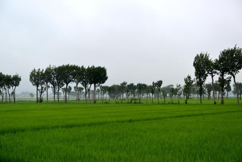 雨の景色-3