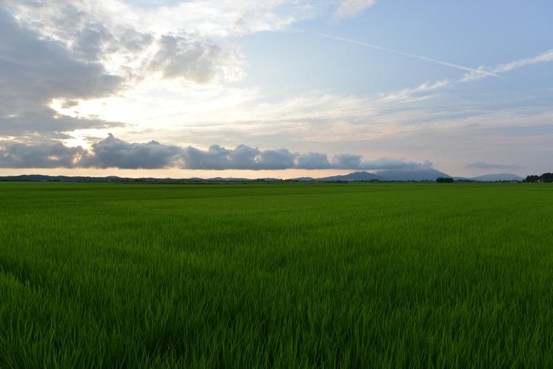 水田の夕暮れ-1