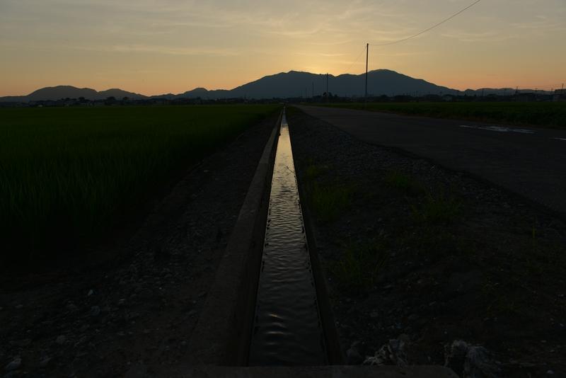 今日の夕暮れ 水田-1