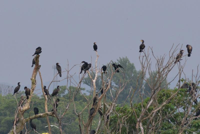 河原の鳥たち-2