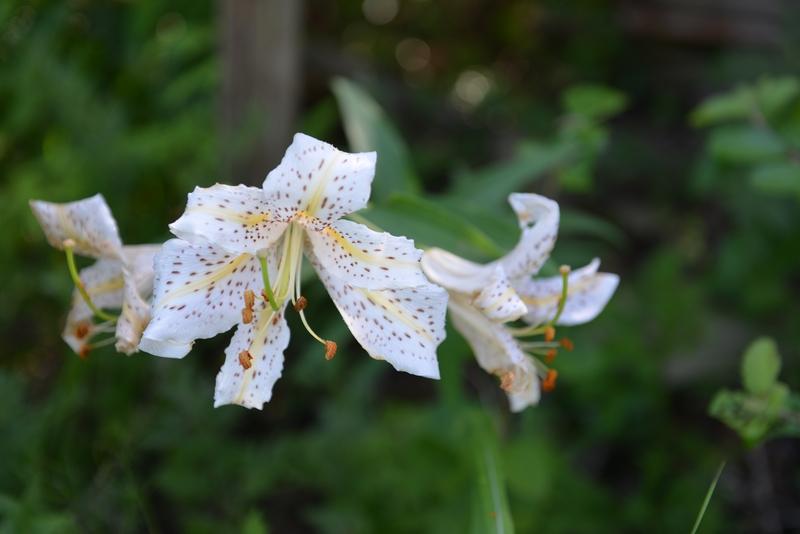 夏の花-3