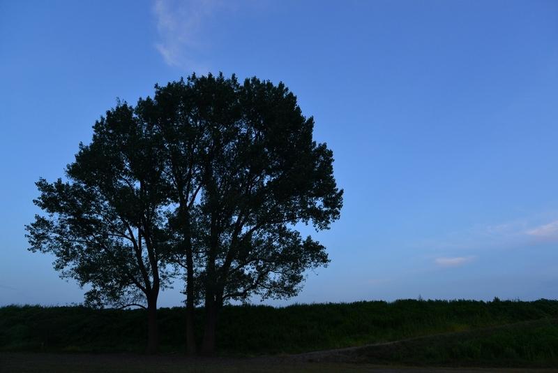 樹 シルエット-2