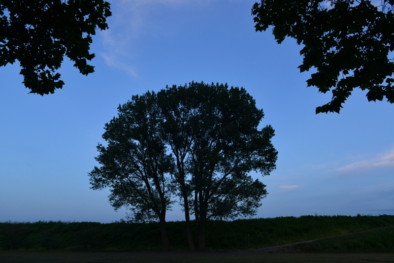 樹 シルエット-3