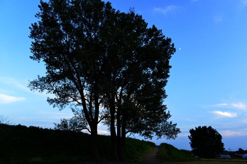 樹 シルエット-1